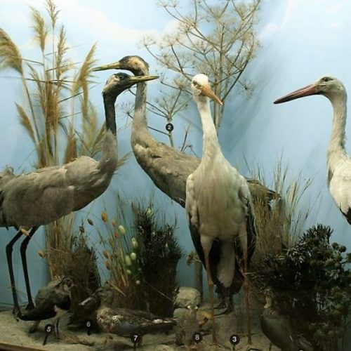 Unravel the Past in the Larnaca Museum of Natural History