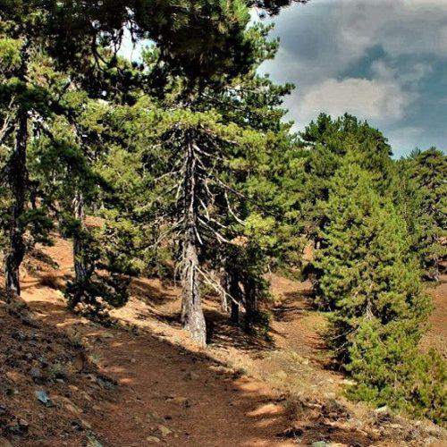 Artemis Nature Trail