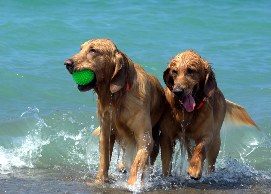 Dog-Friendly Beaches for Your Furry Friends