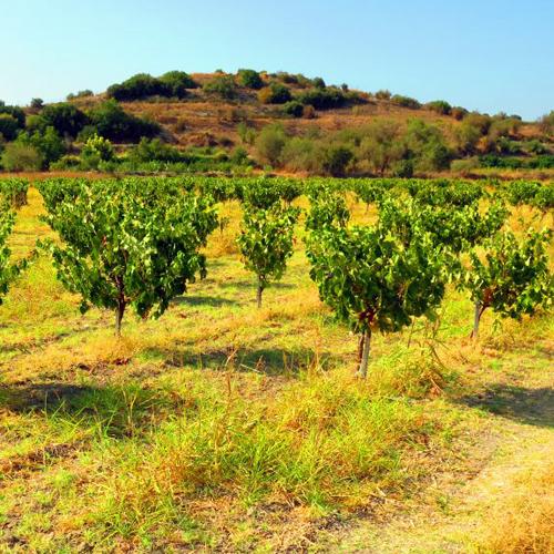 Laona to Akamas Wine Route