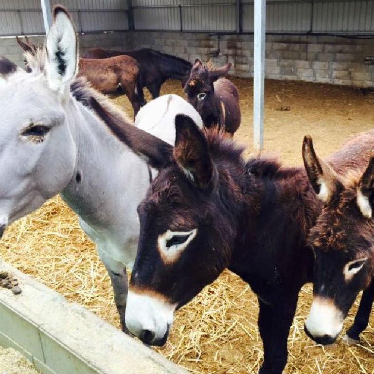 Golden Donkeys Farm Anniversary Party